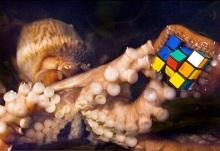 rubik_octopus